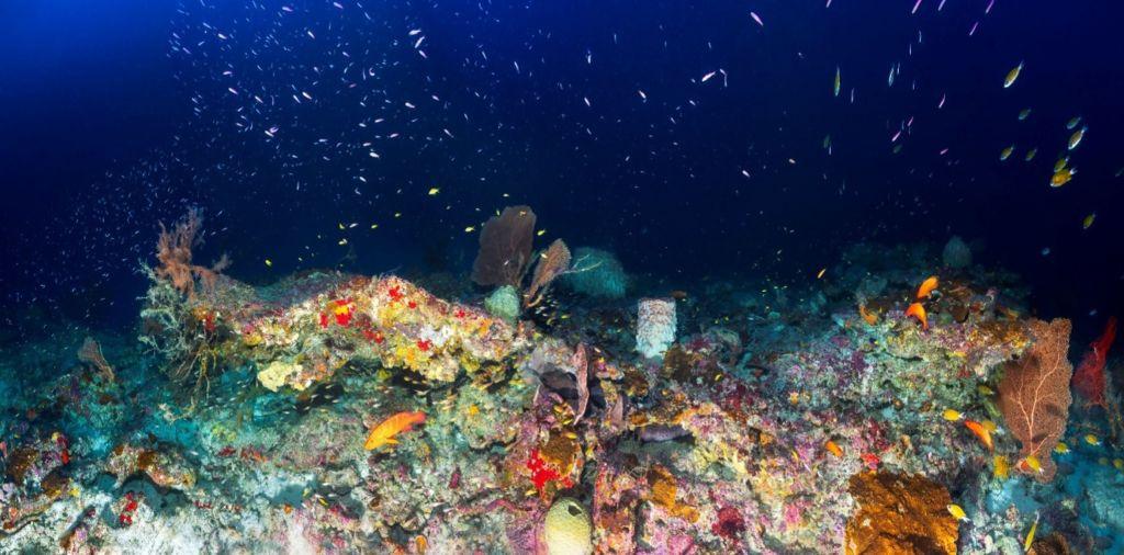 Ecosystème-Mesophotique-Panorama-75m-Mayotte-©-Deep-Blue-Exploration.jpg